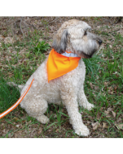 Dog Not Gone No Fly Zone Repellant Dog Safety Kerchief Small Orange