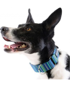 """Gold Paw Series Small 1"""" Martingale Collar Riverbed"""