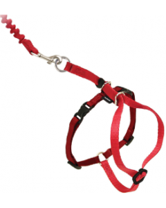 Premier Medium Come With Me Kitty Red Harness